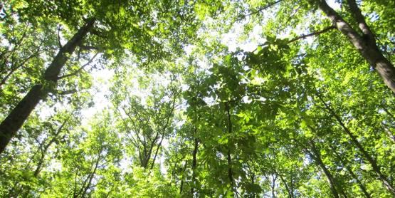 forest, Yates County NY