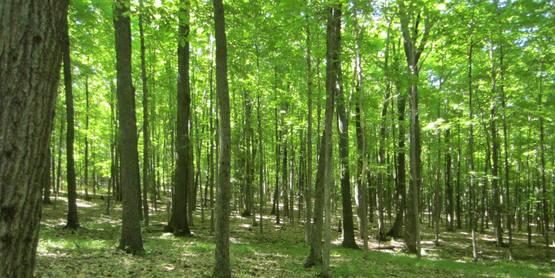 Woods walk, Yates County 9/7/14