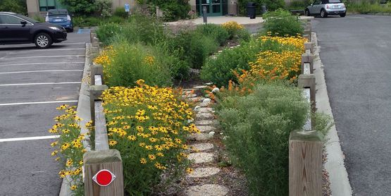 The rain garden at the Kermit Graf Building on Griffing Ave. in Riverhead.