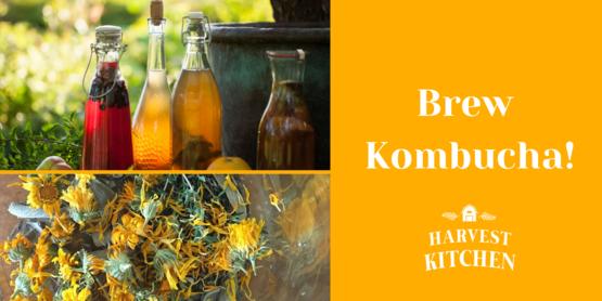 banner for kombucha class