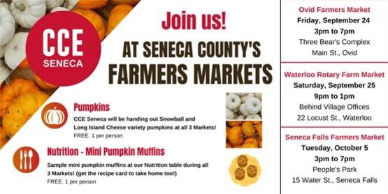 Farmers Markets Pumpkins