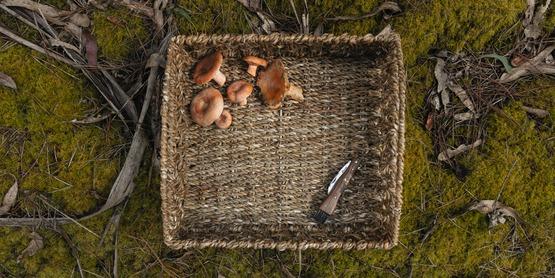 Top down view of mushrooms in a wicker basket.