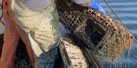Fisheries Technician Dan Kuehn removing derelict lobster trap from LI Sound