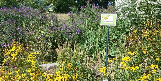 butterfly garden