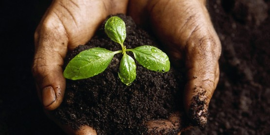 soil and seedling in cupped hands