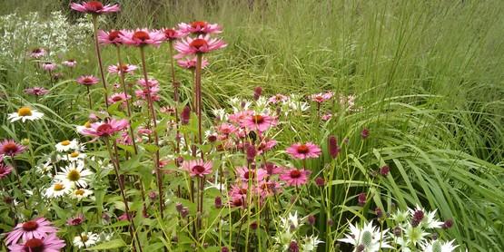 Pollinator landscape