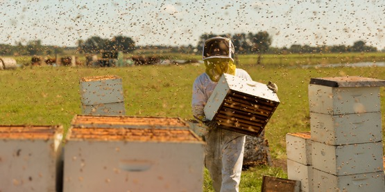 Pollinator Film