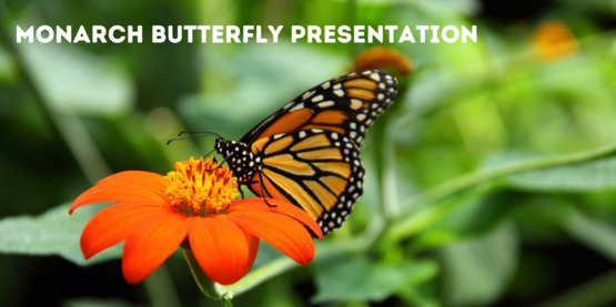 monarch butterfly presentation