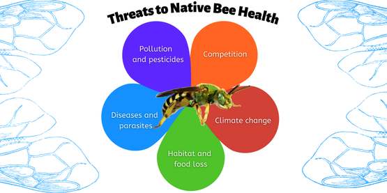 Graphic of a flower with threats to native pollinators written on each petal including pollution and pesticides, diseases and parasites, habitat and food loss, climate change, and competition