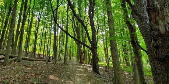 Woods, trees, forest, nature
