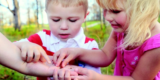 Children investigating bugs in adult's hand