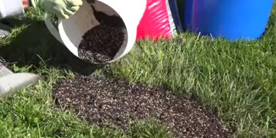 patching weak spots in a lawn.  area without grass in a lawn, hand with bucket pouring soil on the spot