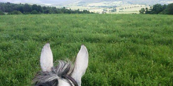 2021 Horse Farm Tour