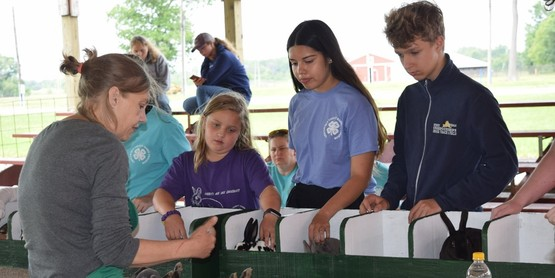 Youth in the 4-H Rabbit Project listen to judge Paula Murdock evaluate their rabbits at their summer show held July18th