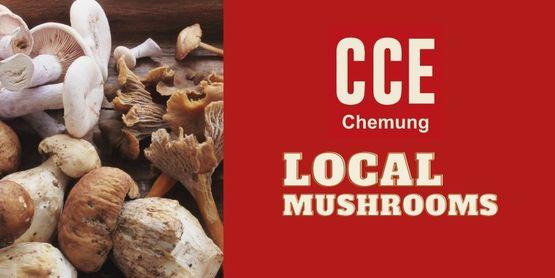Find local mushrooms