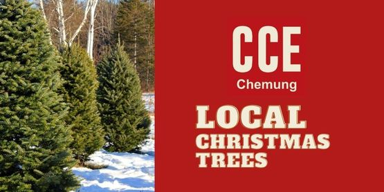 Find local Christmas Tree Farms