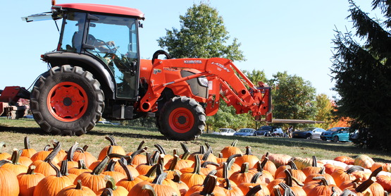 Tractor and pumpkins!