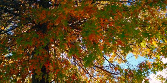 Autumn Colors Event Banner