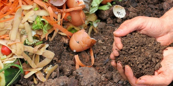 Food scraps and compost