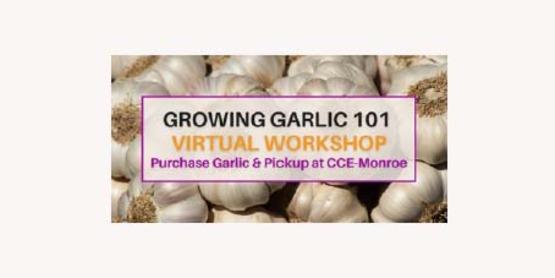 garlic 101