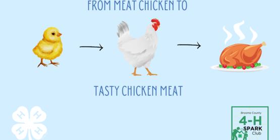 meat bird project