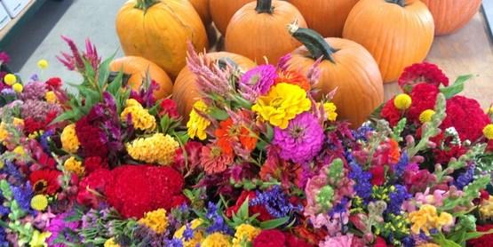 agriculture, flowers, pumpkins
