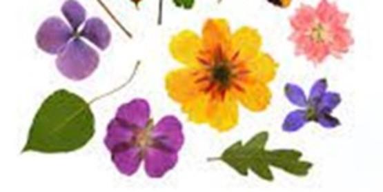 Flower Press-Saving Summer, Oct. 6, 6:30 pm - 8:30 pm.