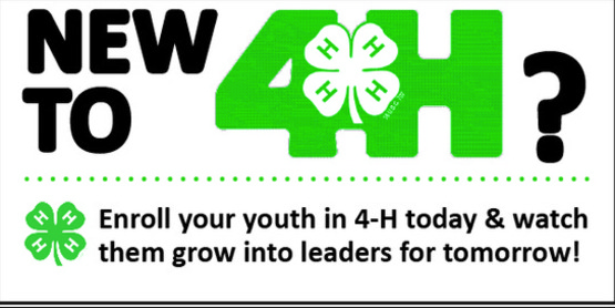New to 4-H