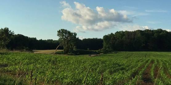 fields in Danby, NY