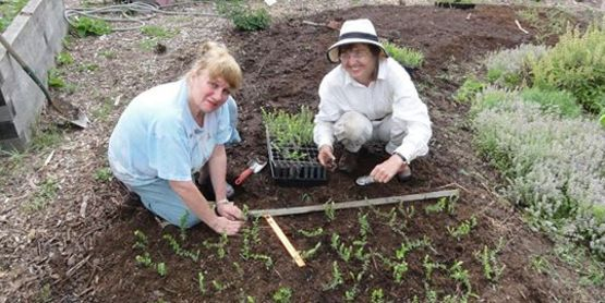 Our wonderful volunteers planting cranberries!
