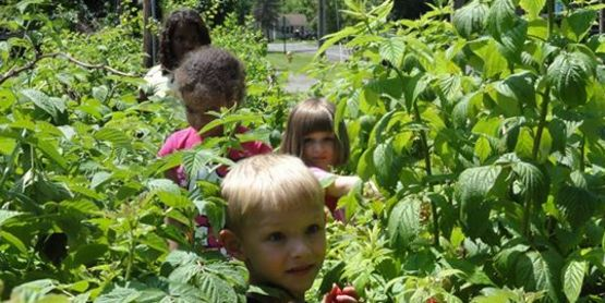 Children from My Place, inspecting for insects and snacking along the way in the CCE Teaching Garden!