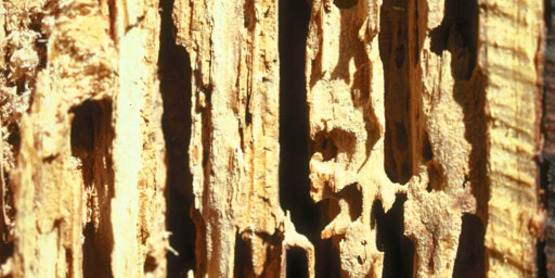 Protect your woodlots from firewood pests.