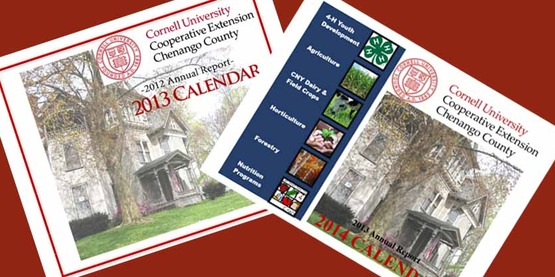 Chenango County annual reports