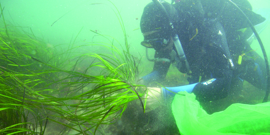 The CCE Eelgrass Team are all certified  SCUBA divers.