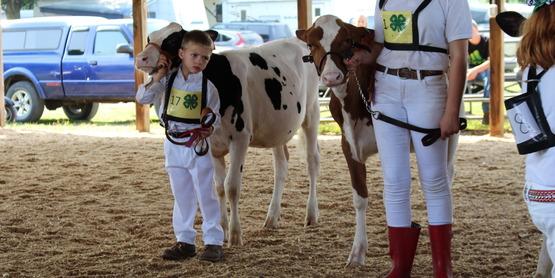 Chenango County Fair 2017 Dairy Show