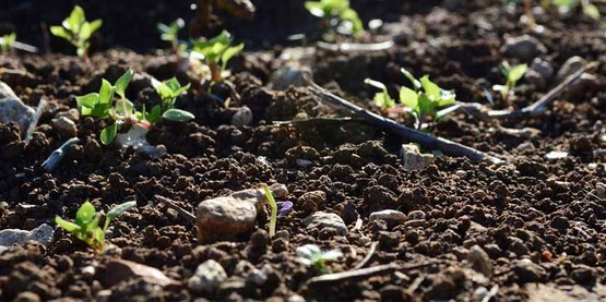 plants sprouting in dark soil