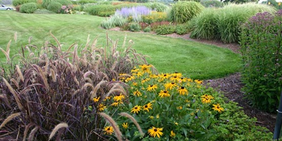 Lawn and perennial border