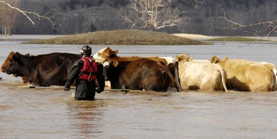 Farm disaster preparedness training is offered through Cornell's NY EDEN program.