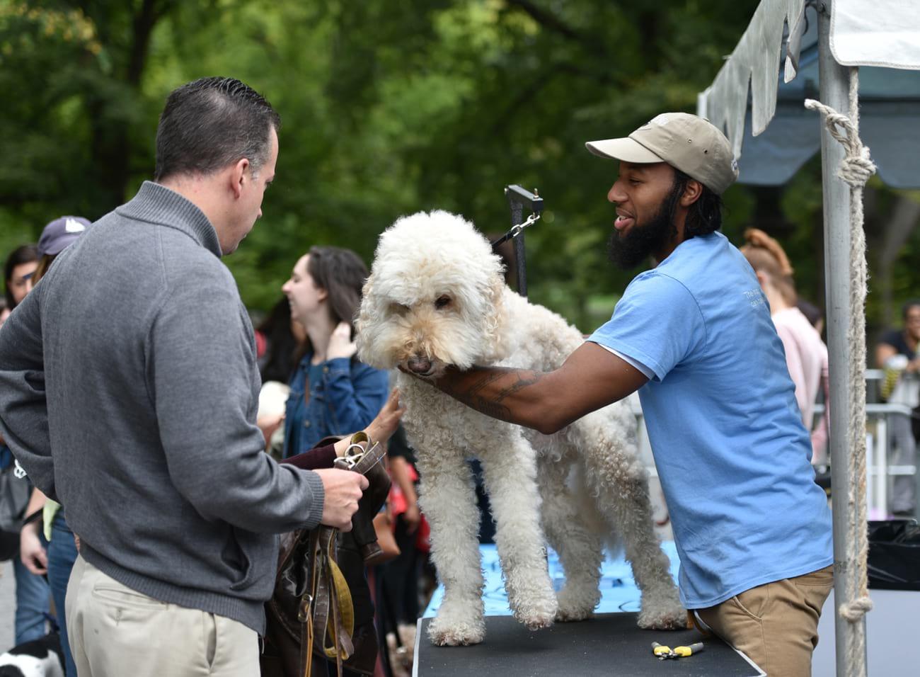 My dog loves Central Park Fair