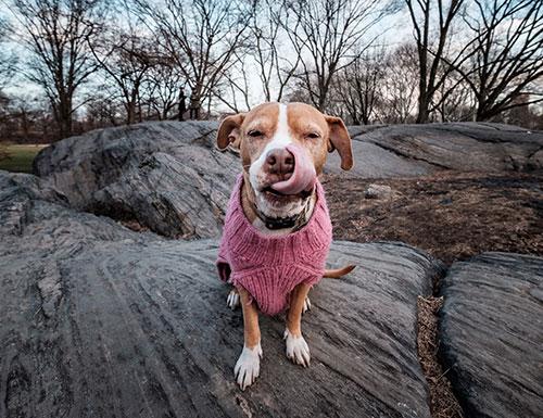 Dog: Casey