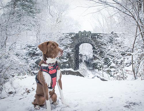 Dog: Emma