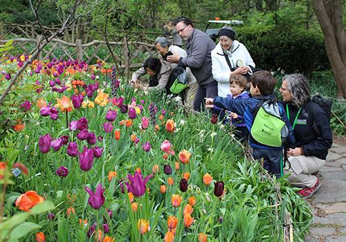 Spring gardens tour