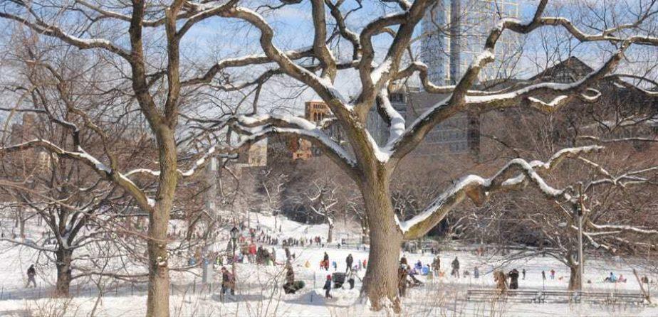 East Meadow trees in winter