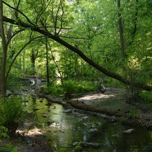Green canopy over a brook in the North Woods