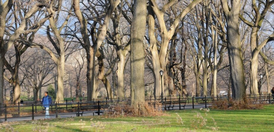 Without leaves, the structures of our trees are on view
