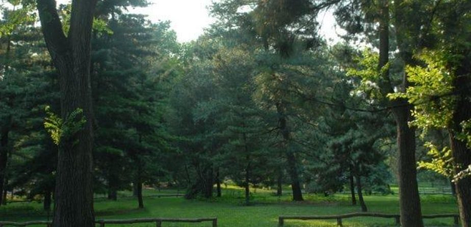 A view of the Pinetum