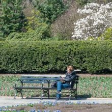 A socially-distanced parkgoer at Conservatory Garden