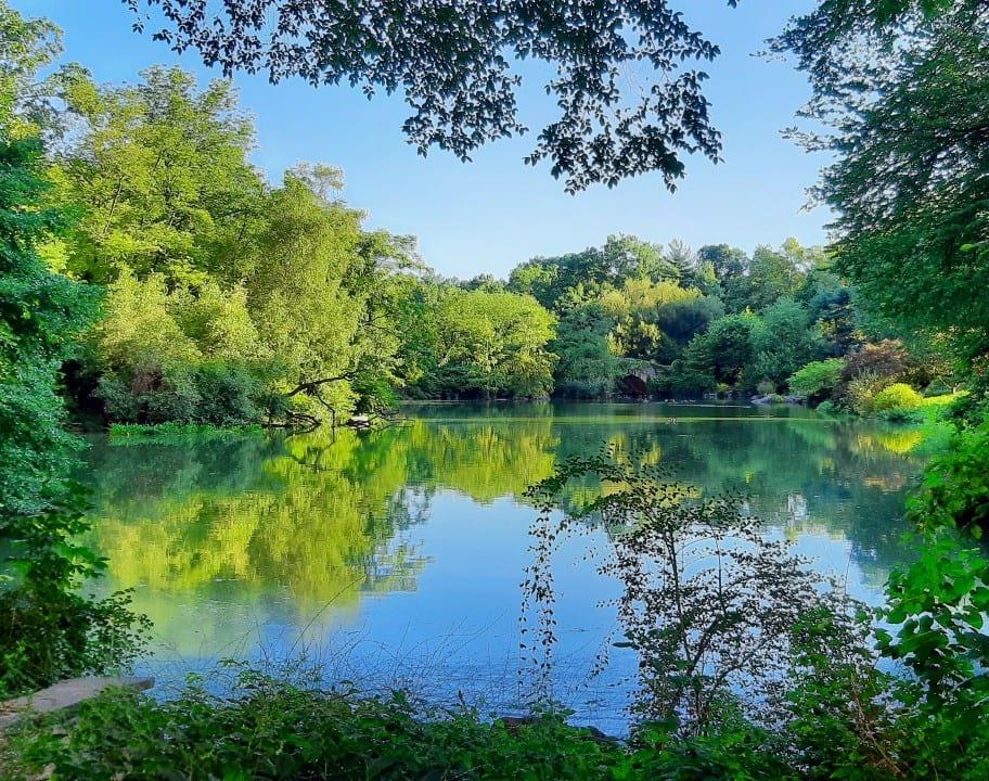 A view across the Pond on a clear summer day