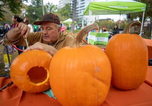 Pumpkin Flotilla