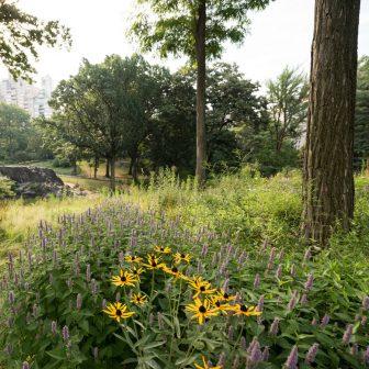 Dene Wildflower Meadow